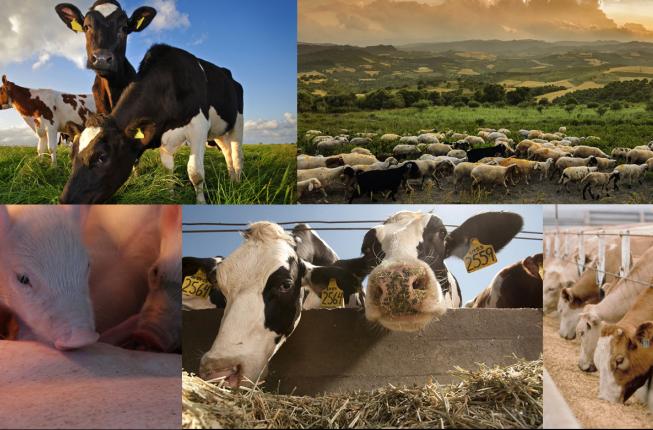 Collegamento a Principles of data science applied to livestock