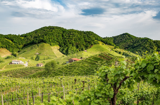 Collegamento a Story of a Wine: The Importance of Being Prosecco